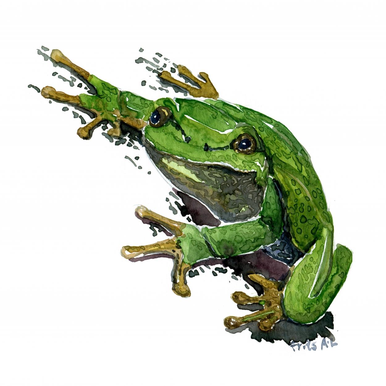 Danske Frøer, et visuelt projekt om frøerne i Danmark